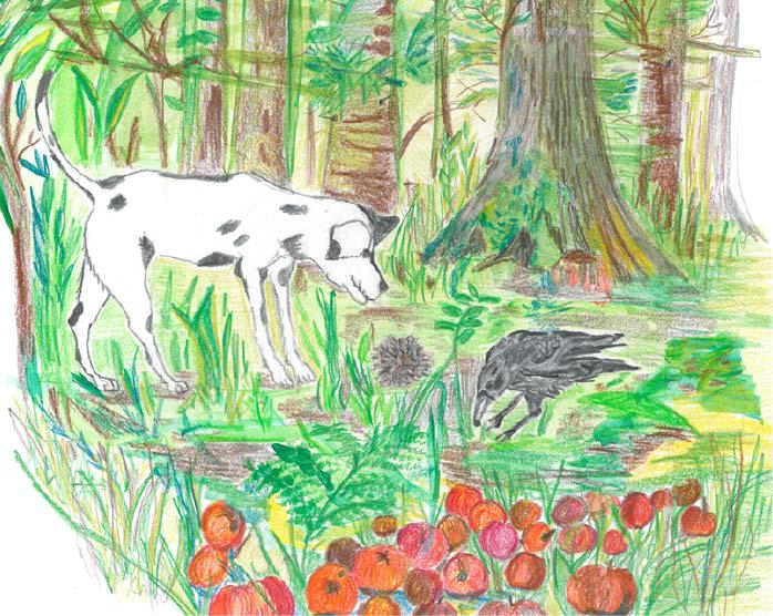 Hund und Rabe im Wald